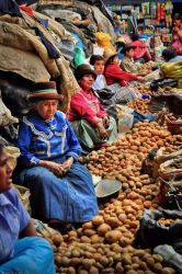 Peru's 4,000 types of potatoes.